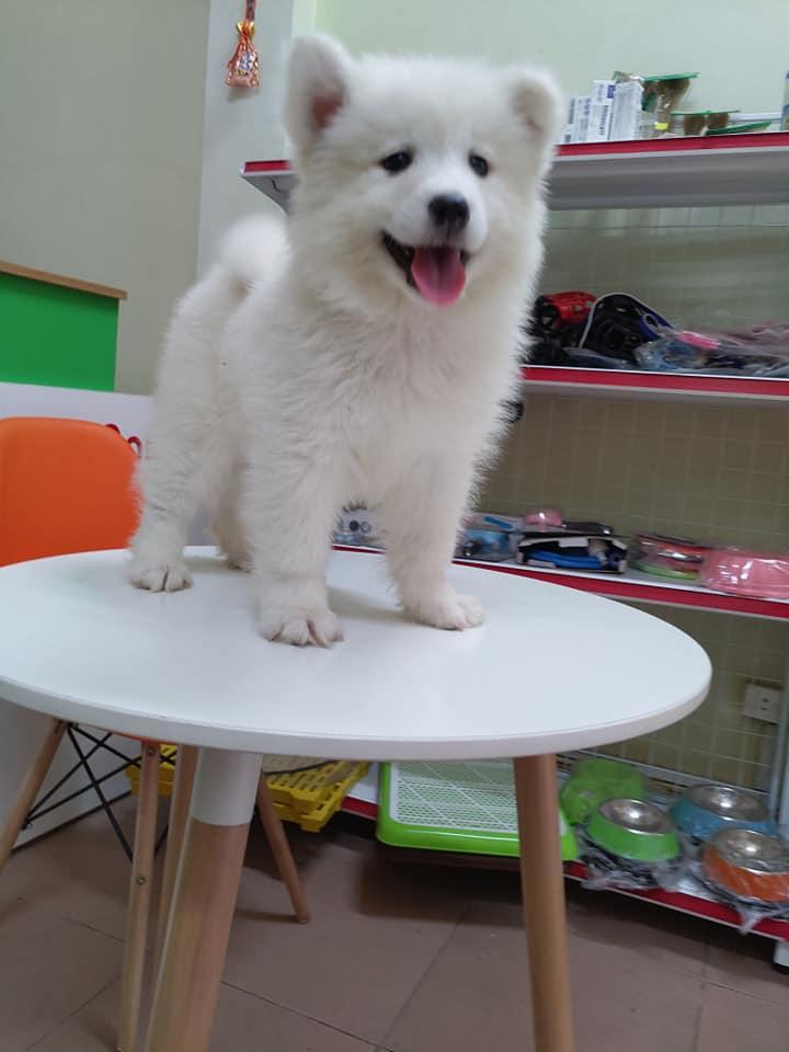 Sam trắng 2 tháng tuổi