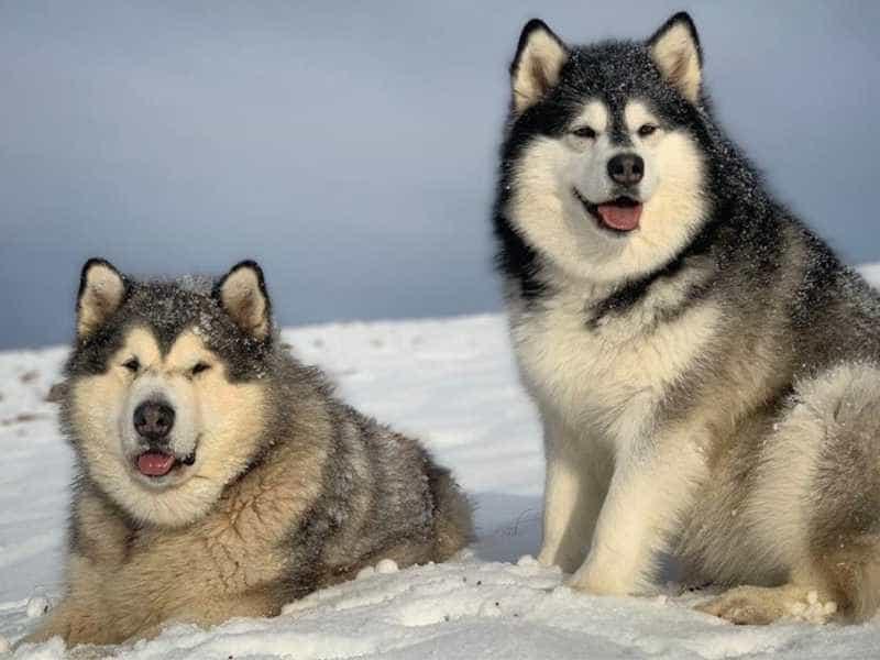 Alaska dang  yeu