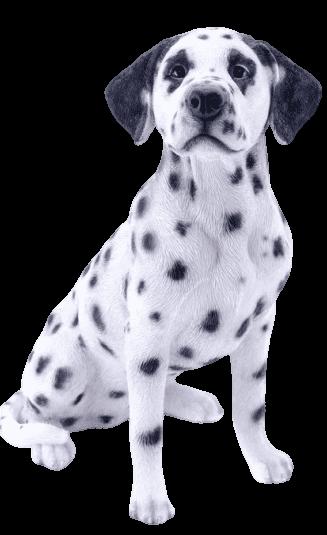 Chó Đốm