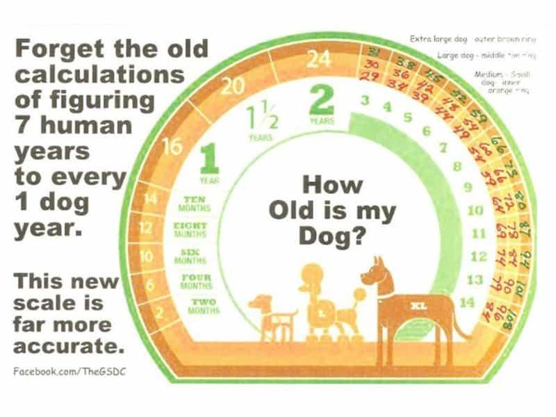 Cách tình tuổi thọ của chó