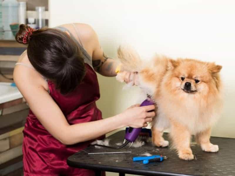 Cách cắt tỉa lông cho chó