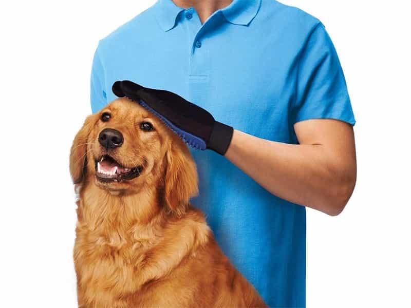Chải lông cho chó đúng cách
