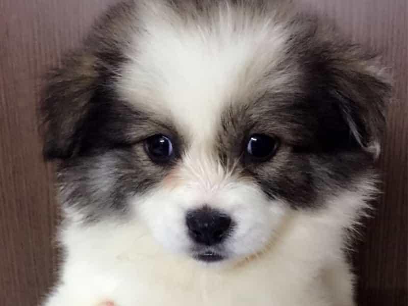 Top 5 Chú Chó Giá Rẻ Dưới 1 Triệu