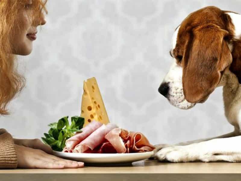 Chế độ dinh dưỡng chó chó cảnh