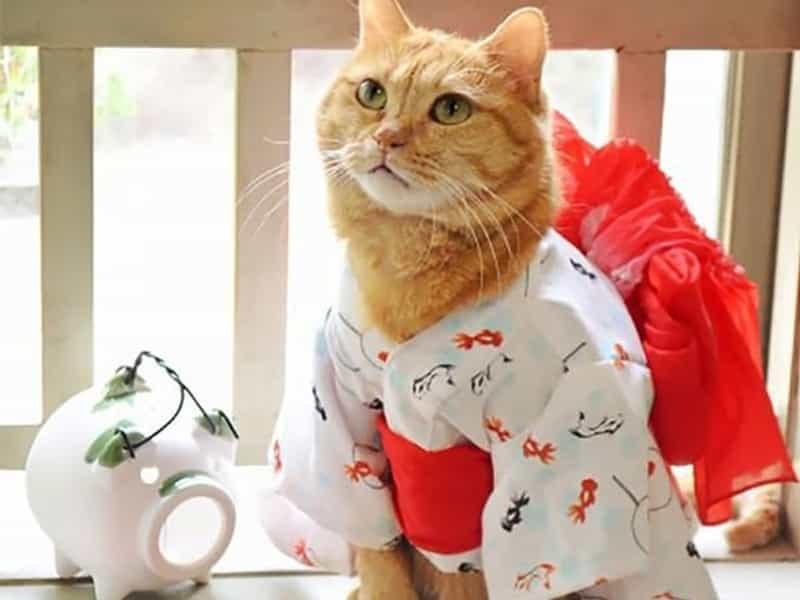 Tìm hiểu quần áo cho chó mèo