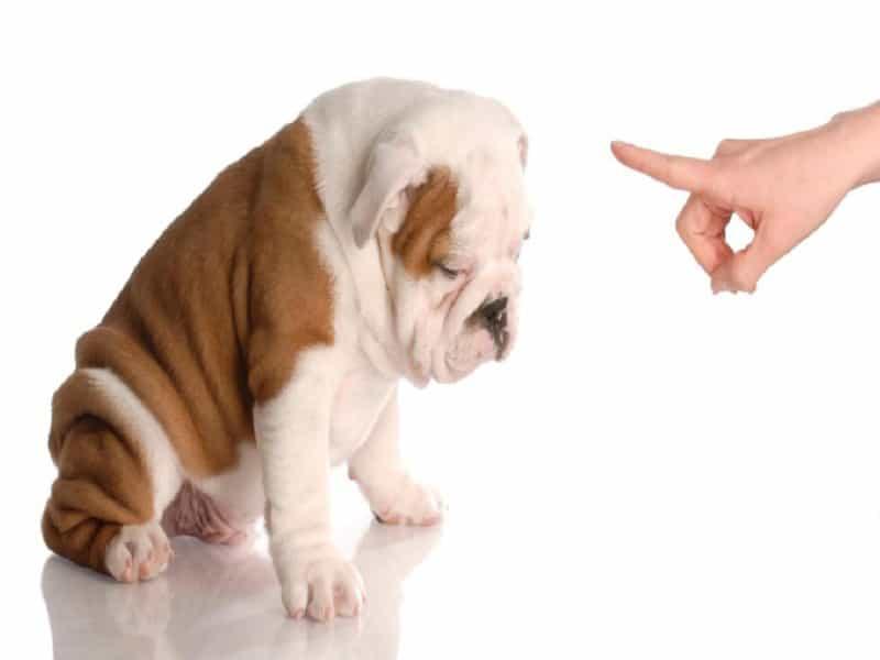 Xịt hướng dẫn chó đi vệ sinh