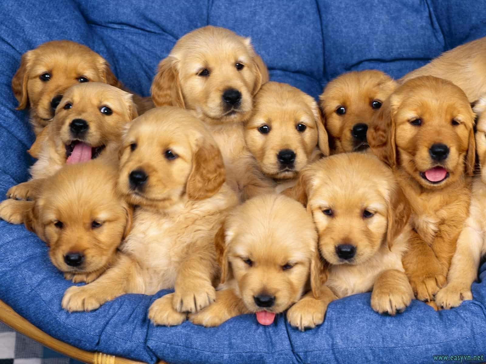 Những hình ảnh về các chú chó đáng yêu