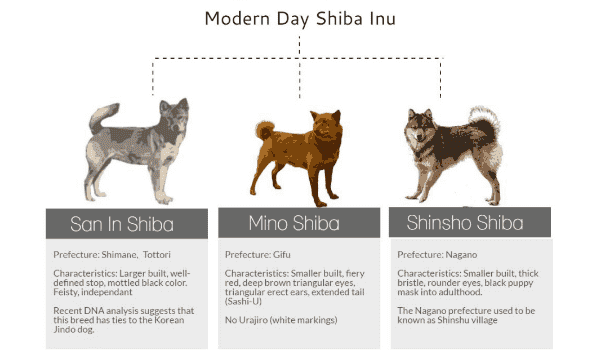 Shiba hiện nay là sự kết hợp của 3 dòng Shiba xưa