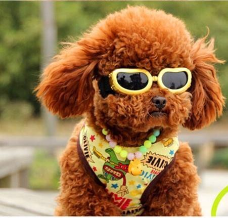 Kính Mát cho chó 2021
