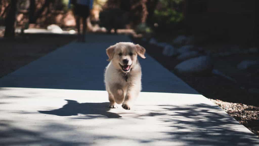 có nhiều giai đoạn khác nhau trong cách nuôi chó con