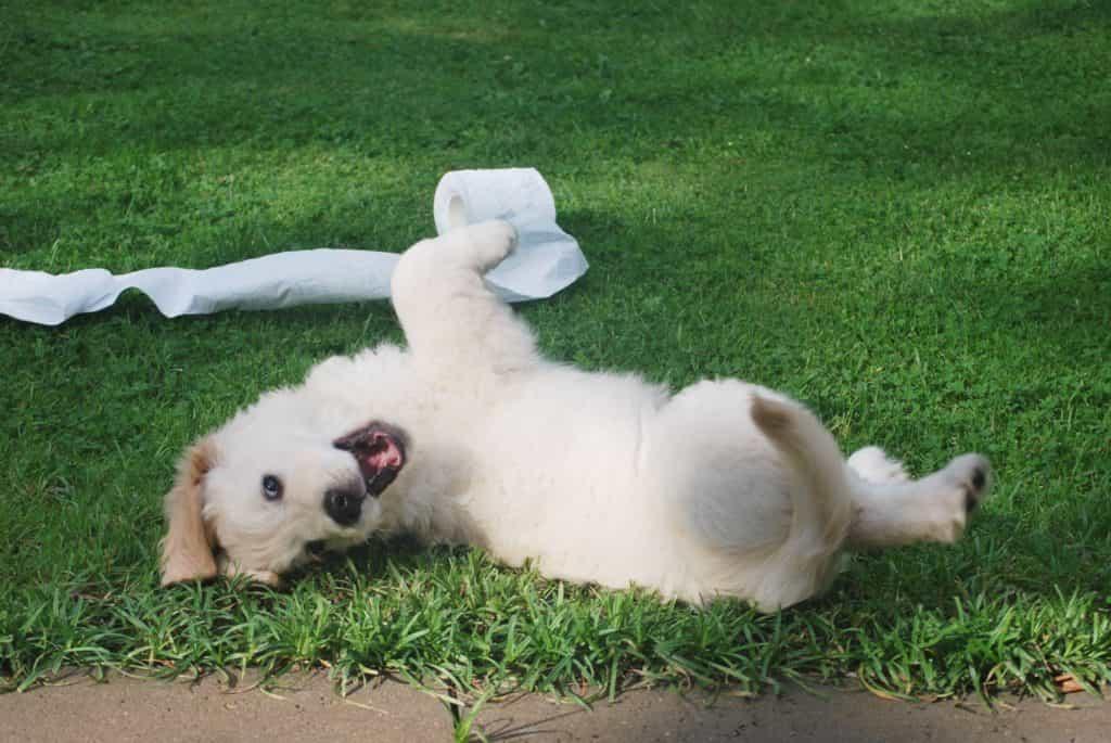 cách nuôi chó con từ ba tháng tuổi