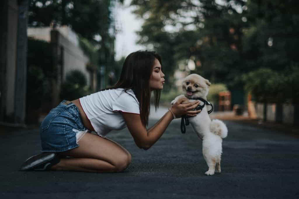 cần chú ý nhiều cách nuôi chó con