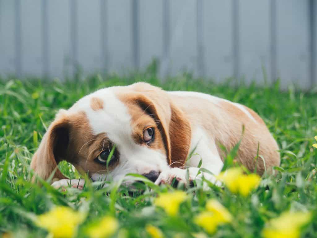cách nuôi chó con và cách cho chó ăn dặm