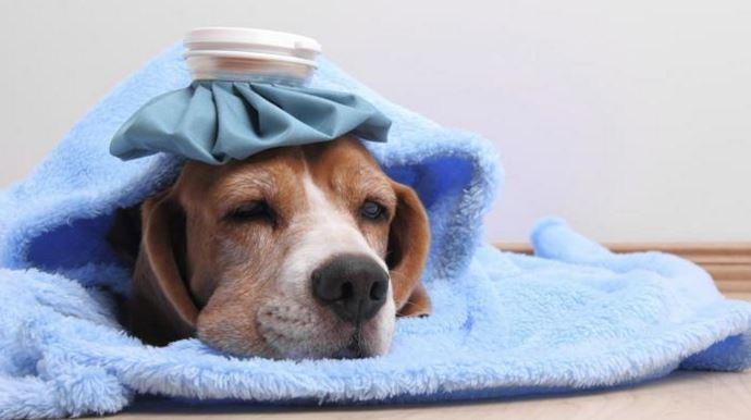 Tại sao phải bổ sung canxi cho cún