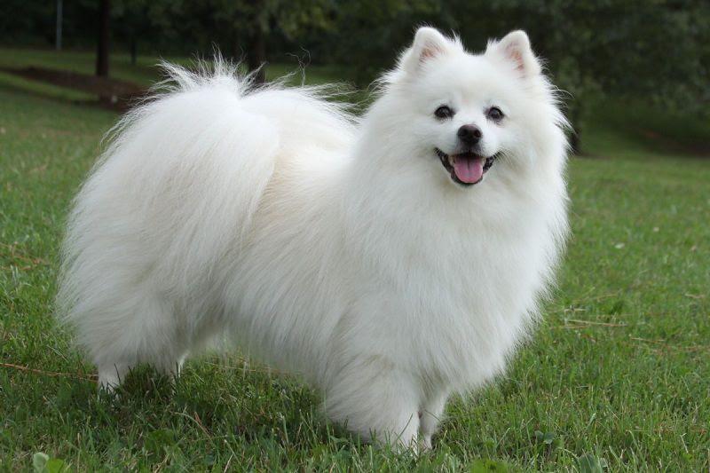 COn chó xinh đẹp