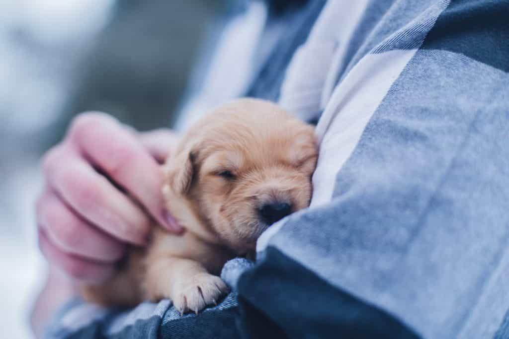cách nuôi chó con từ một tháng tuổi