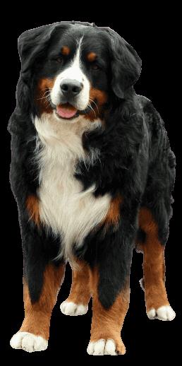 Chó Tam Sắc